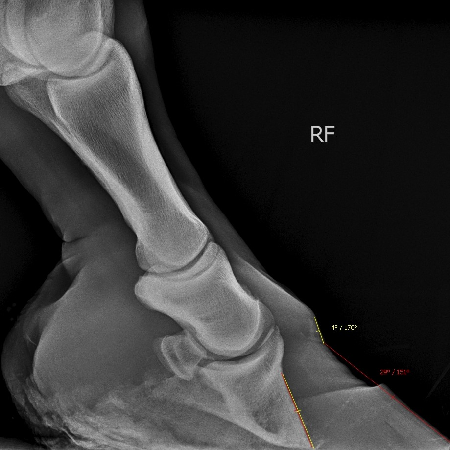 Front Foot-Lateromedial-2017-09-02-08_06_27-850